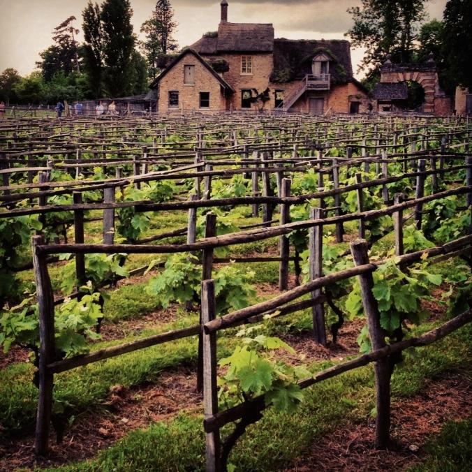 vineyards at versailles