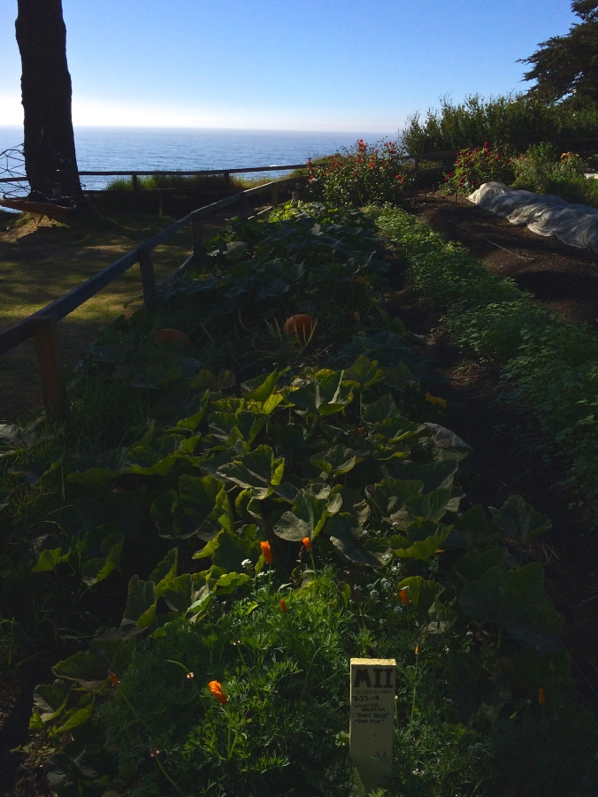 esalen gardens