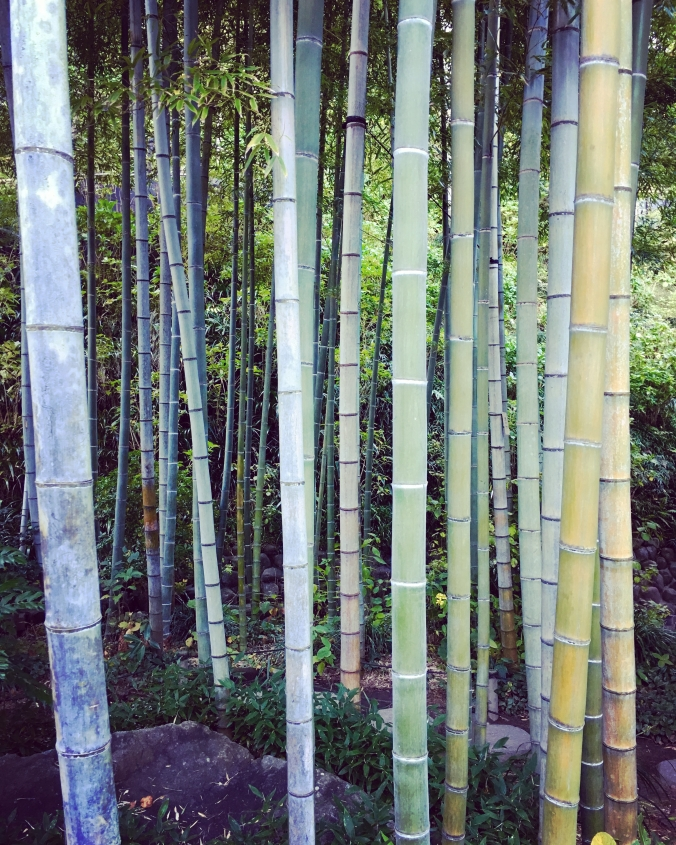 bamboo grover