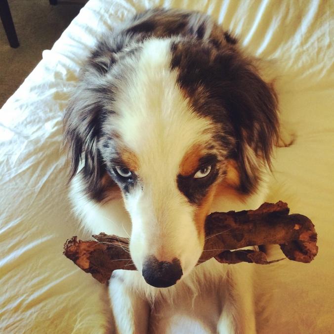 bernie with branch