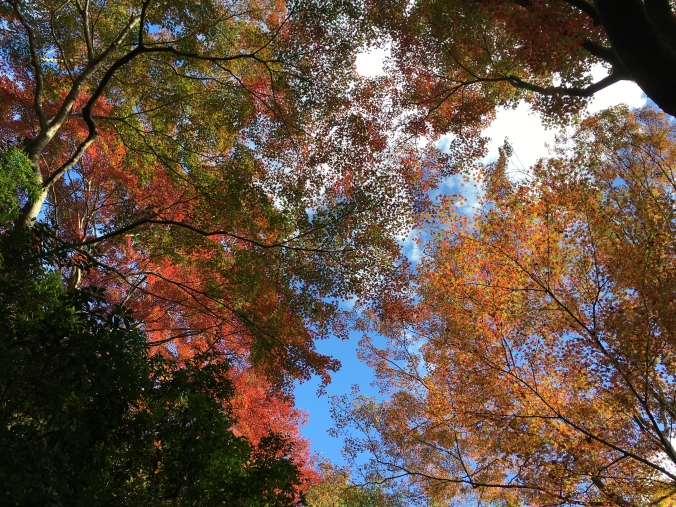 fall colors kyoto