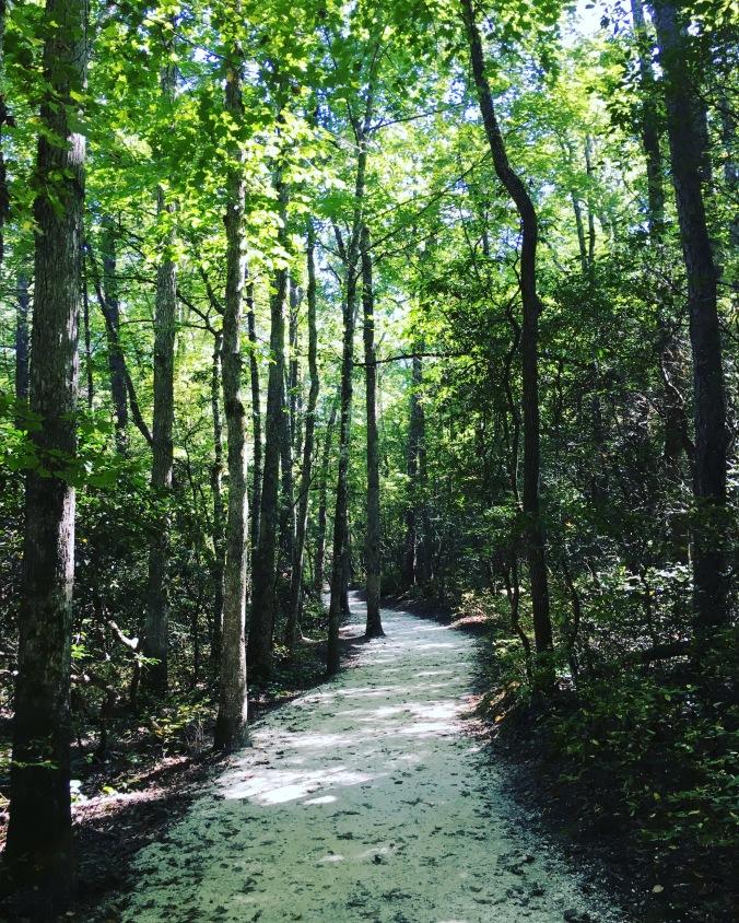 DUPONT FOREST.jpg