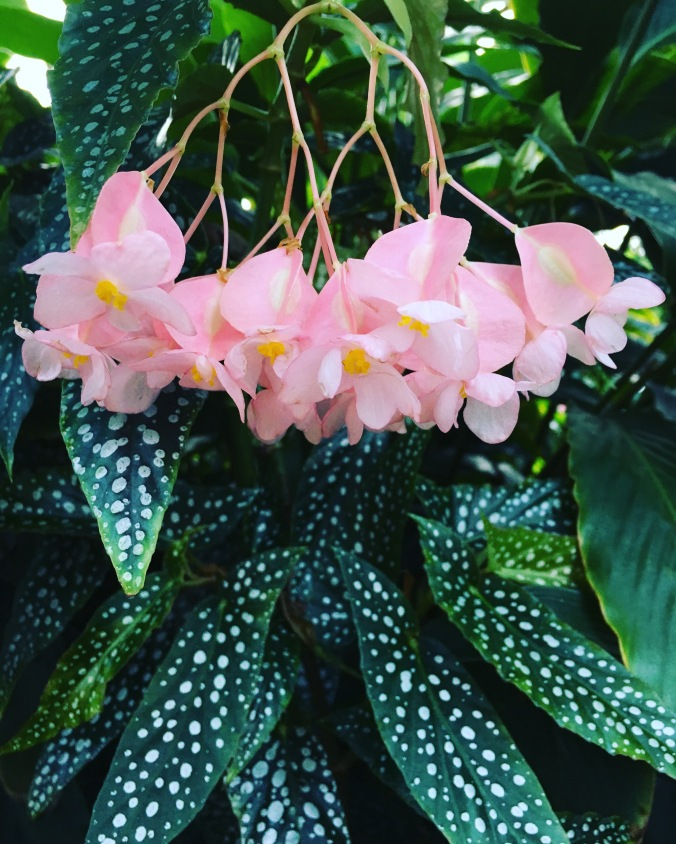tropical-flowers