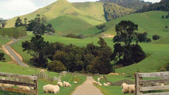 nz-sheep-farm